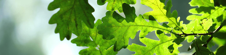 Close-up tree leaves
