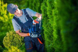 Tree Maintenance Guide